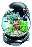 TETRA Cascade Globe Noire - Aquarium pour Poisson Combattant ou Poisson Rouge - 6,8L