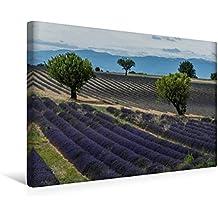 Calvendo Premium Textil-Leinwand 45 cm x 30 cm Quer, Ein Motiv aus Dem Kalender Die Farbe des Lavendels | Wandbild, Bild auf Keilrahmen, Fertigbild auf Echter Leinwand, Leinwanddruck Natur Natur