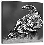 Einsamer Falke mit braunem Gefieder Kunst B&W, Format: 60x60 auf Leinwand, XXL riesige Bilder fertig gerahmt mit Keilrahmen, Kunstdruck auf Wandbild mit Rahmen, günstiger als Gemälde oder Ölbild, kein Poster oder Plakat