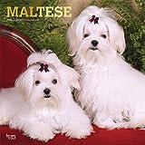 Maltese - Malteser 2019 - 18-Monatskalender mit freier DogDays-App (Wall-Kalender)