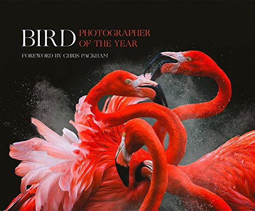 bird-photographer-of-the-year-collection-3