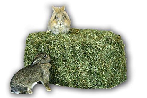 Heu 15kg Heuballen Futter Kaninchen Meerschweinchen Hase Heu Scheune (Misc.)