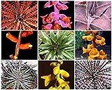 Farmerly Dyckia Mix Exotic Sukkulente Kaktus Hetchia Cacti Xeriscaping Aloe Seed 25 Samen