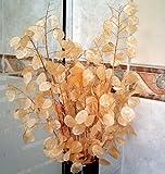 Promozione! fiori 2016 argento semi di erba fan 100PCS Lunaria fiori annua semi rari Garden Home Bonsai di impianto