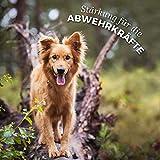 AniForte Wurm-Formel 250 g- Naturprodukt für Hunde - 6
