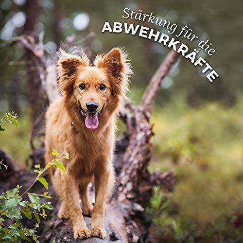AniForte Natürliches Multivitamin 100g – Naturprodukt für Hunde und Katzen - 5