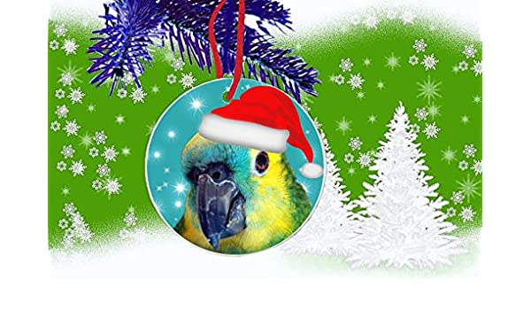 Festive Blue Fronted Amazon Parrot Santa Bird Pets Hanging Round