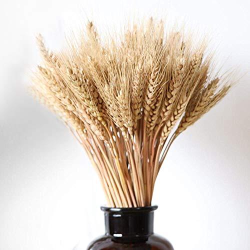 FRFJY 100 Stücke Getrocknete Natürliche Weizen Bündel Blumenschmuck Hause Tisch Hochzeit Mittelstücke Dekorative 23,6 \'\' Hoch