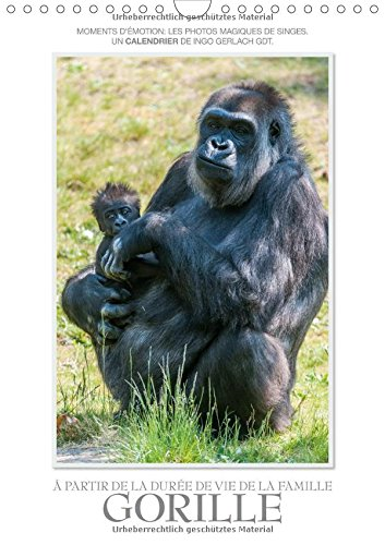 Moments d'émotion: de la vie de la famille de gorilles./BE-Version (Calendrier mural 2015 DIN A4 vertical): Photos magiques de nos parents les plus mensuel, 14 Pages (CALVENDO Animaux) - 2015 Monkey-kalender