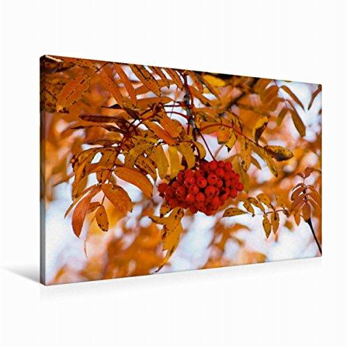 Leinwand Eberesche im Herbstkleid 90x60cm, Special-Edition Wandbild, Bild auf Keilrahmen, Fertigbild auf hochwertigem Textil, Leinwanddruck, kein Poster