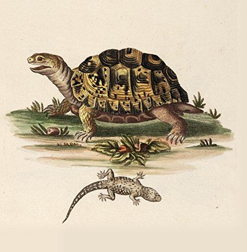 Schildkröte Natur Geschichte 14x 14cm Grußkarte (blanko Innen) (Valentines Schildkröten Tag)