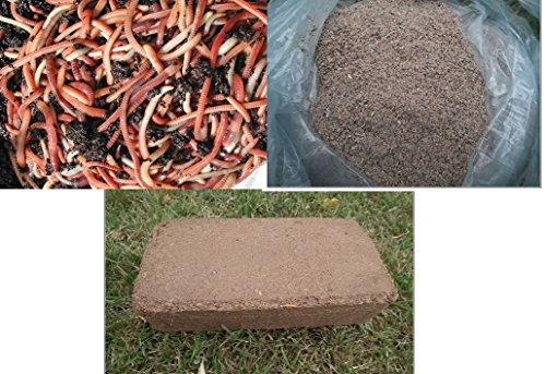 TIGER COMPOSTING WORM STARTER SET, 250g WORMS + 250g Worm Food + Coir Bedding Wormcity Wormery Rescue Kit