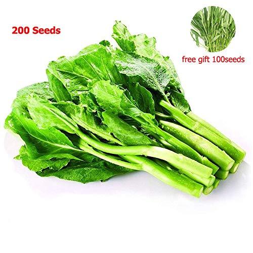 Chinesischer Brokkoli, 200 Samen + grünes Gemüse, 100 Samen, chinesischer Kal, Bio, 100% Gartengemüse, für Pflanzen, einfaches Wachstum