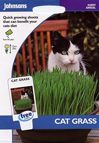 johnsons-seeds-pictorial-pack-fiore-erba-gatto-25g-semi