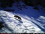 MINOX DTC 1100 Wildkamera und Beobachtungskamera - 8