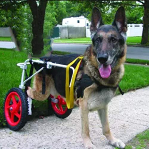 Hundebett Katzenbett Hund Rollstuhl Bester Freund Mobilität