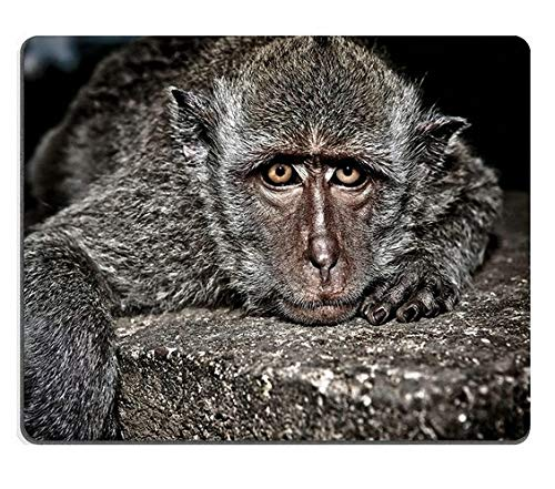 Mauspad Gaming-Mauspad Naturkautschuk-Mauspad Nahaufnahmeportrait eines niedlichen Affen, der flach auf dem Bauch auf Einem Stein liegt und M0A02532 schaut
