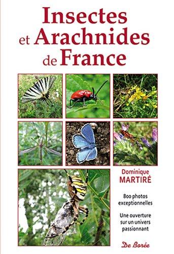 Insectes et Arachnides de France