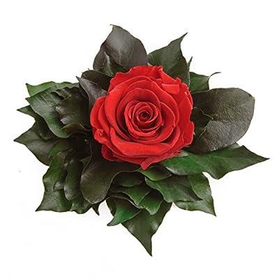 ROSEMARIE SCHULZ® Blumengesteck 3 Jahre haltbar in Silberbecher 1 Rose konserviert Abmessungen: 9x12cm von ROSEMARIE SCHULZ - Du und dein Garten