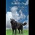 Scaredy Dog! Understanding & Rehabilitating Your Reactive Dog
