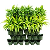 Worth Garden Self Watering Vertical 42 fioriere Tasche in Confezione da 14 Pezzi