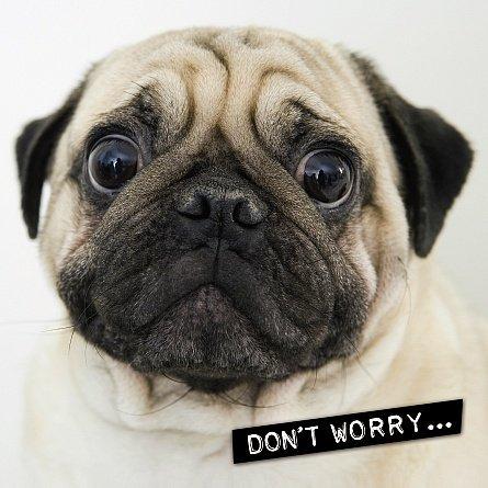 Me to you up close 3d compleanno occasione biglietto d' auguri pug dog non preoccupatevi