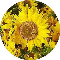 Dem Boswell Sunflowers Reserveradabdeckung Universal Fit 17 Zoll