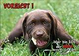 INDIGOS UG - Türschild FunSchild - SE575 DIN A5 ACHTUNG Hund Labrador Retriever - für Käfig, Zwinger, Haustier, Tür, Tier, Aquarium - aus hochwertigem Alu-Dibond beschriftet sehr stabil