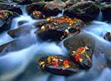 Fine Art Print – Blätter im Herbst auf Wet Boulders in Stream, Great Smoky Mountains National Park, North Carolina von Bentley Global Arts Gruppe, canvas, multi, 39 x 29