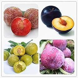 Pinkdose 10pcs Familie Rosaceae Prunus Cerasifera Pflanze Zierpflanze Kirschpflaume Strauch Pflanze weit verbreitet Myrobalan Pflaumenpflanze: MIX