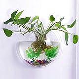 TONGXU Appeso a Parete in Vetro da Appendere Vaso fioriera Bubble pianta Contenitore (15 cm Diametro)