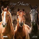 Magic Horses 2016: Kalender 2016 (What a Wonderful World)