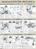 Musculation des pectoraux : Poster