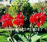 Fash Lady 20 Teile/beutel Canna Samen Mix Farben Diy Topfpflanzen Samen Indoor/Outdoor Topf Samen Keimrate Von 95% Kostenloser Versand 1