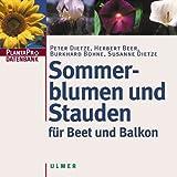 Sommerblumen und Stauden für Beet und Balkon