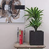 Best Home-Cube Indoor Plants - Indoor Plants Dracena