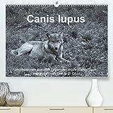Canis lupus(Premium, hochwertiger DIN A2 Wandkalender 2020, Kunstdruck in Hochglanz): Impressionen in schwarz-weiss aus dem Leben der Wölfe (Monatskalender, 14 Seiten ) (CALVENDO Tiere)