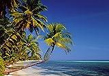 Papier Peint Photo Mural-PALM BEACH-(220Sc)-366x254cm-8 lés-Colle et Instructions Inclus!-XXL Non Woven Poster Stickers Murale Géant Mer Palmiers Plage Skyline Île Paysage Bambou Animaux Caraïbes