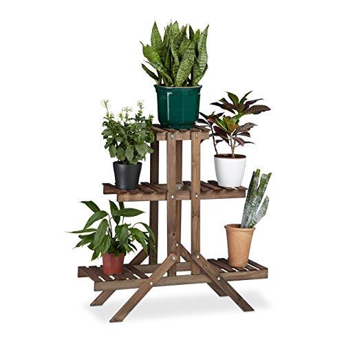Wohnzimmer Pflanzen wohnzimmer pflanzen amazon de