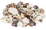 NaDeco Muschelmix Large 1kg Bastelmuscheln Dekomuscheln Deko Muschel Deko Schnecken Maritime Dekoration