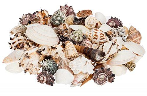 NaDeco-Muschelmix-large-1kg-Bastelmuscheln-Deko-Muschel-Deko-Schnecken-maritime-Dekoration