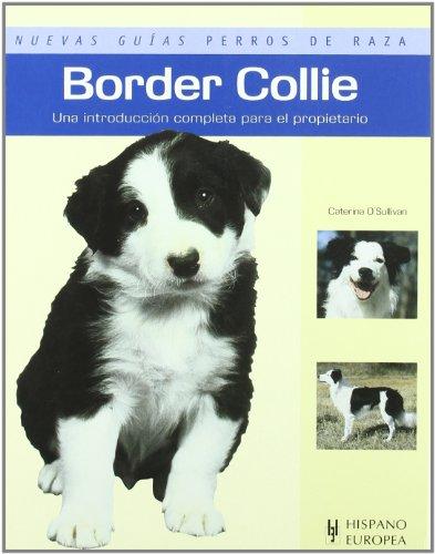 border-collie-nuevas-guias-perros-de-raza