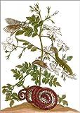 Posterlounge Forex-Platte 90 x 130 cm: Jasmin mit Schlange und Lepidoptera Metamorphose von Maria Sibylla Merian