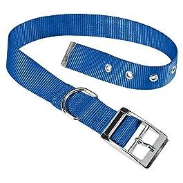Ferplast 75267825 Club Cf25/53 Collare Forato per Cani in Nylon Club con Fibbia in Metallo A:45 x 53 cm, B:25 mm, Blu