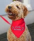 """Spoilt Rotten Pets –Rotes Geburtstags-Halstuch für Hunde – mit der Aufschrift: """"It's my birthday"""" – für alle Rassen erhältlich"""