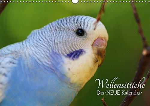 Wellensittiche - der NEUE Kalender (Wandkalender 2019 DIN A3 quer): Ein prachtvolles Titelbild und zwölf herzergreifende Fotos süßer Wellensittiche ... (Monatskalender, 14 Seiten ) (CALVENDO Tiere)
