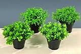 Bella-Vita Dapo Leuchten 4 x Dekorative grüne Pflanze im Topf, Dekoration Kunstplanze Dekopflanze dekogras