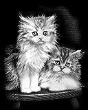 Scraper kratzbild-moelleux pour chat-pack-chat k? tain classique-mIR 500–75 gr? e :  20 cm x 25 cm