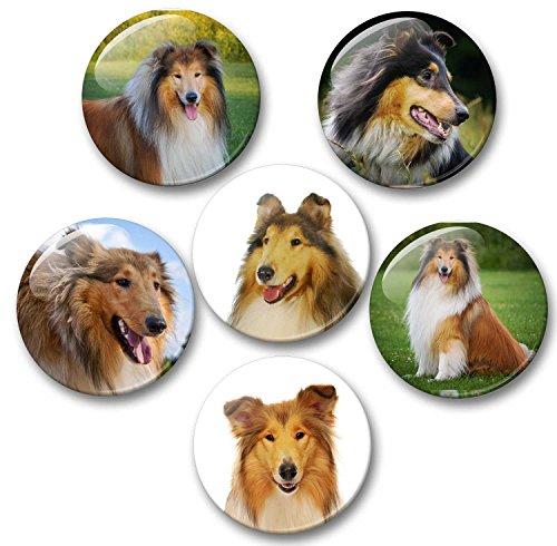 Merchandise for Fans Amerikanischer/Britischer Collie - 6 große Kühlschrankmagnete Ø 5 cm [ 01 ] für Memoboard Pinnwand Magnettafel Whiteboard (Collie Hund-magnet)