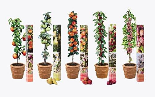 5x-obst-baum-saulen-kollektion-pflanzen-birne-kirsche-pflaume-apfel-und-pfirsich